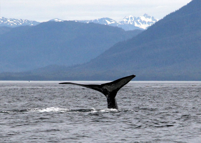 Photo of Alaska Whale Sight Seeing Vacation