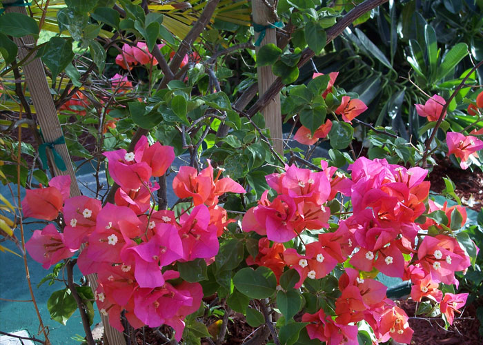 Flowers Seen on Caribbean Vacation